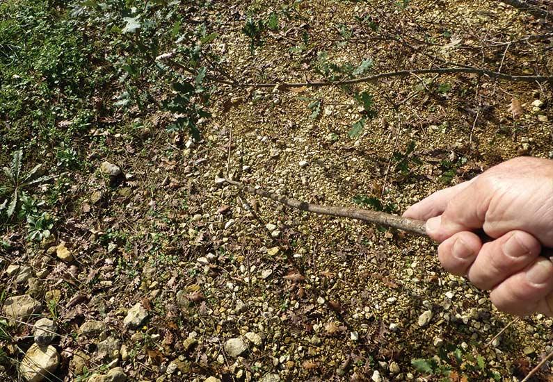 La branche de cornouiller du caveur. © Michel Autier
