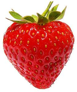 La fraise, le fruit du fraisier
